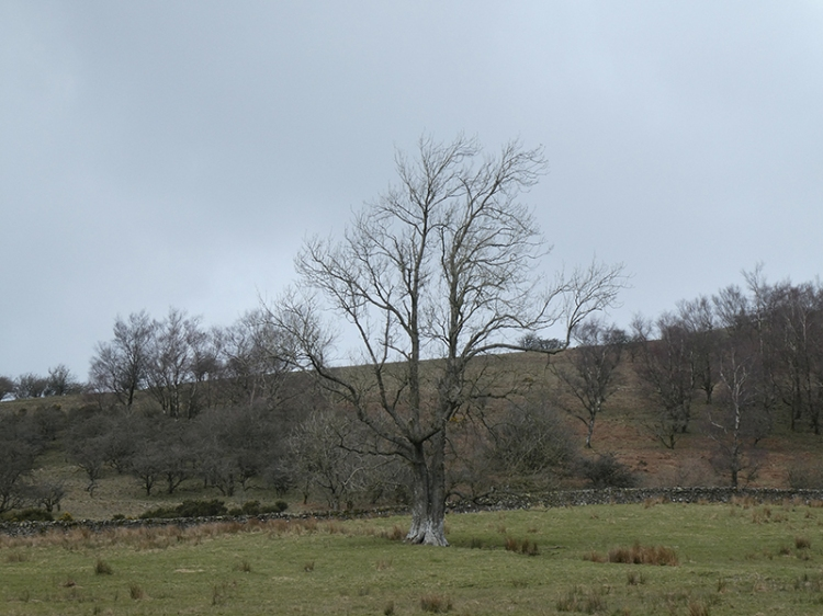 tree and grey clouds