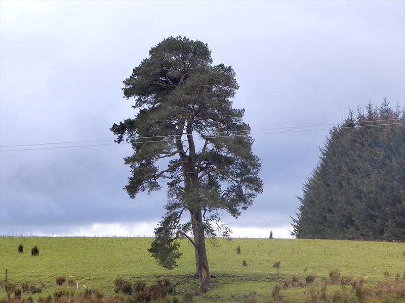 tree at raehills