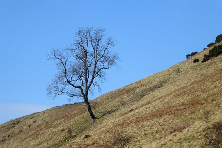 tree before grange quarry