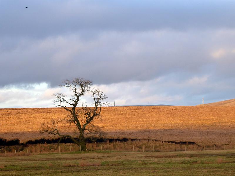 tree bigholms
