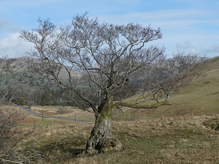 tree green sike