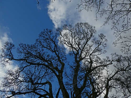 tress and clouds