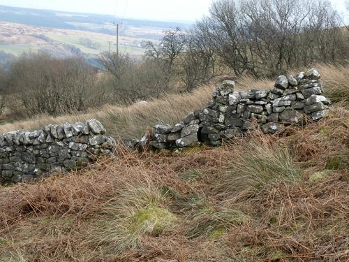 warbla wall