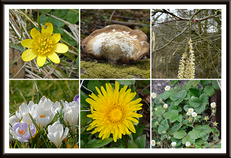 wild flowers and fungus