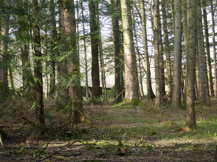 wood at Breckonwrae
