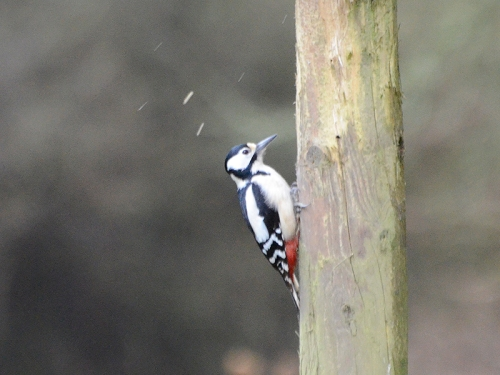 woodpecker laverock hide