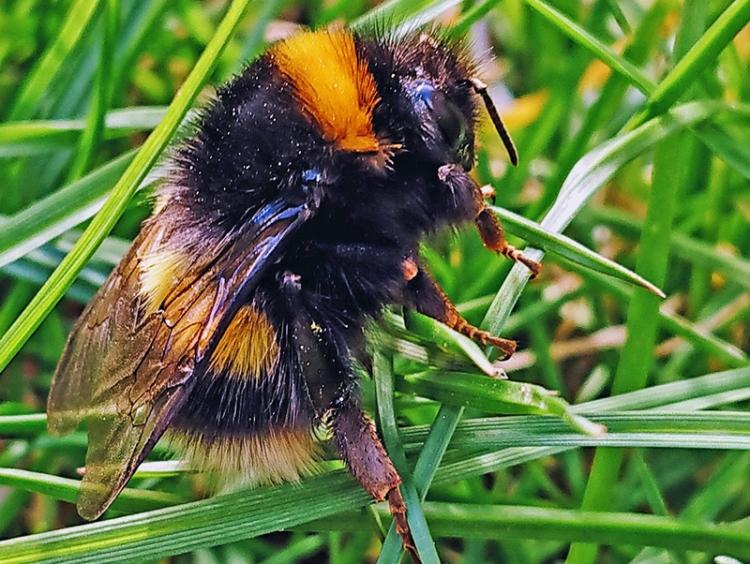 alistair's bee