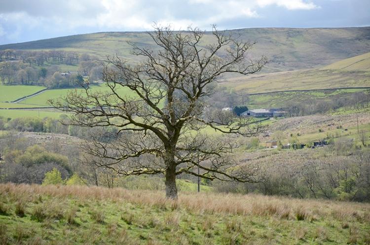bare tree late april