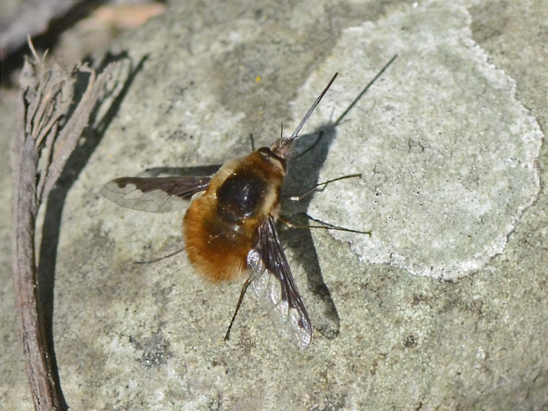bee fky on ground