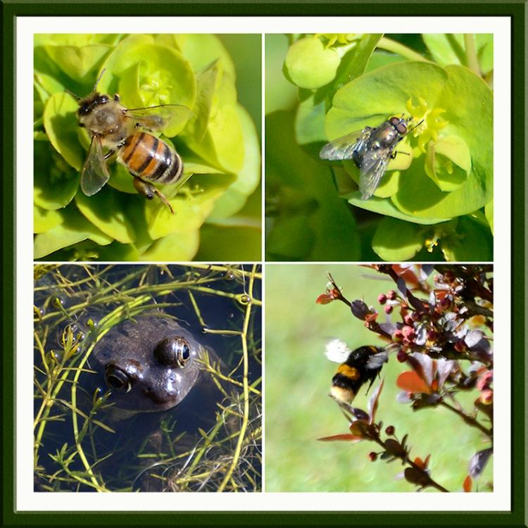 bee fly frog bumble bee