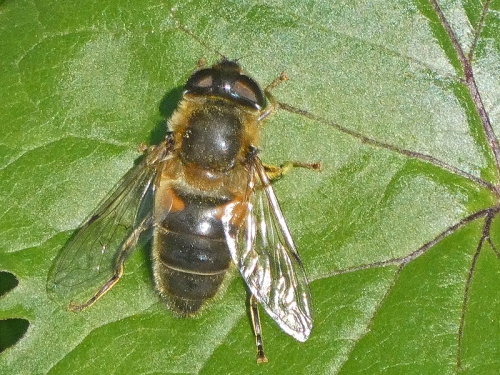 bee on leaf