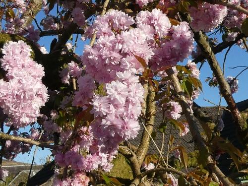 betty's blossom
