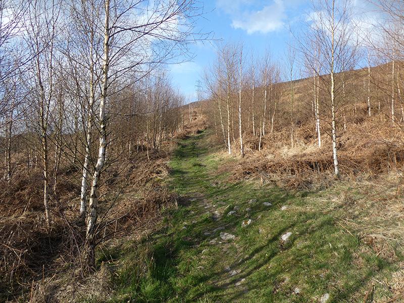 birch wood on Whita