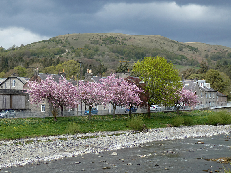 blossom and clouds esk