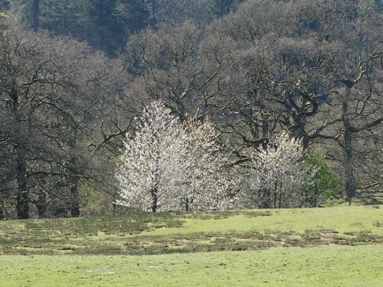 blossom Broomholmshiels