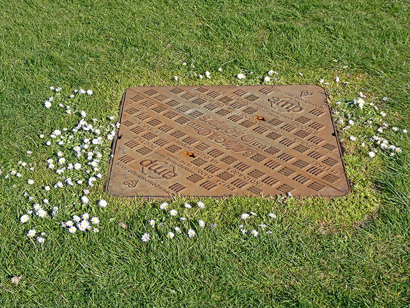 drain cover and daisies