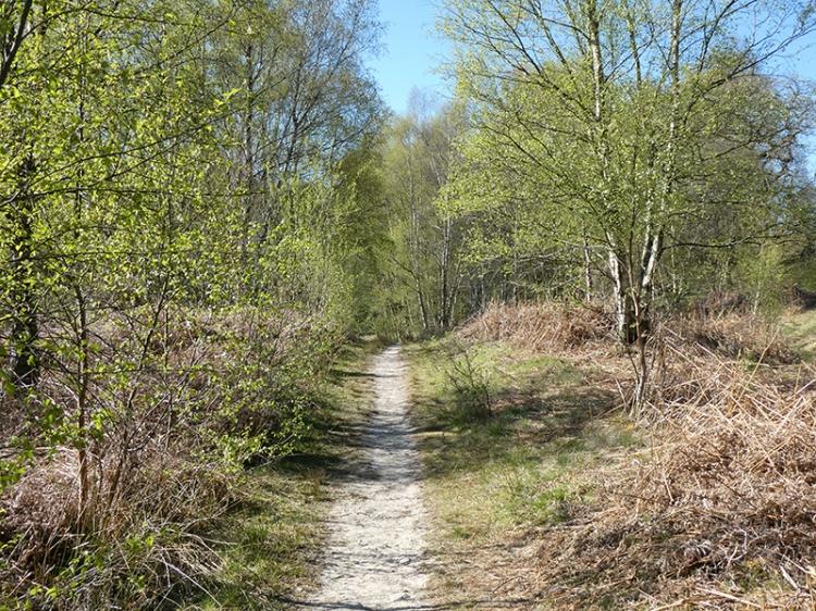 dry path