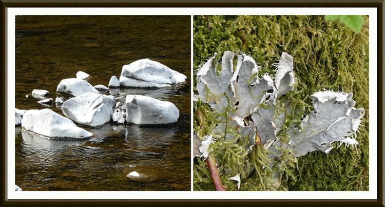 dry rocks and lichen