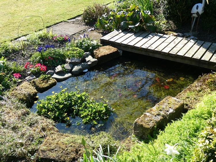 filled pond