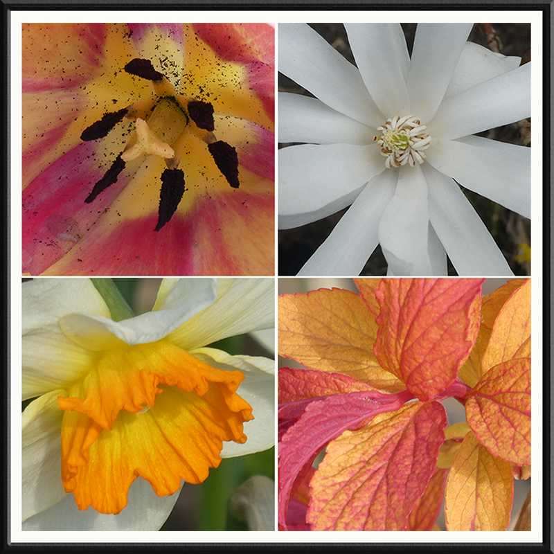 four broght flowers