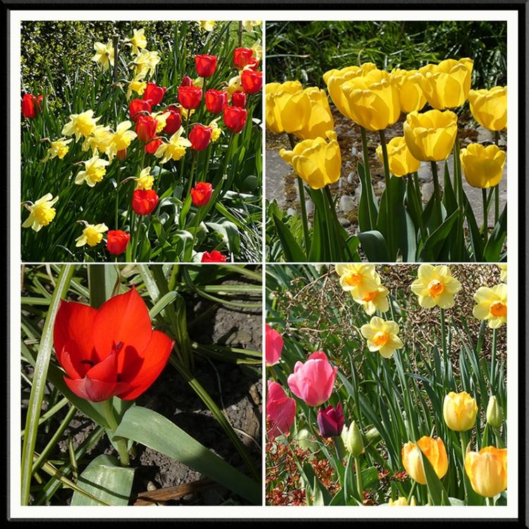 four colourful tulip scenes
