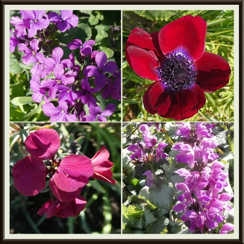 four red flowers