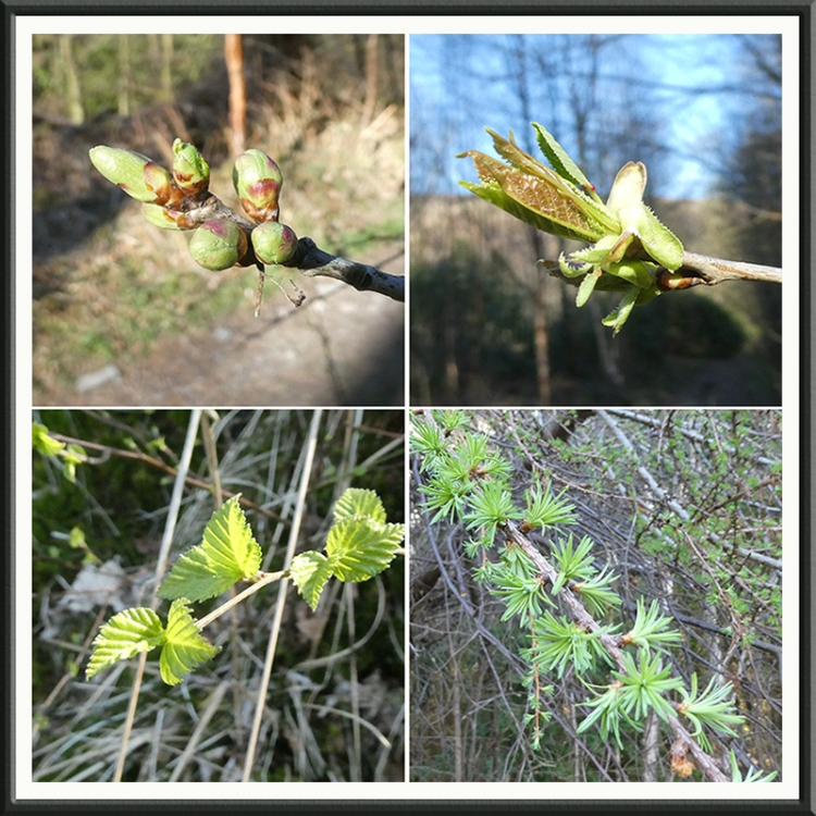 four sping branches