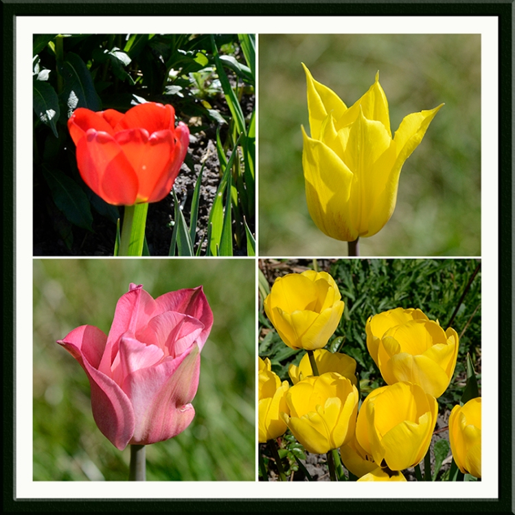 four tulip panel april