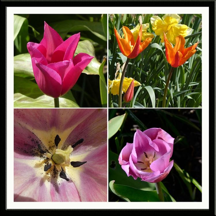 four tulip panel