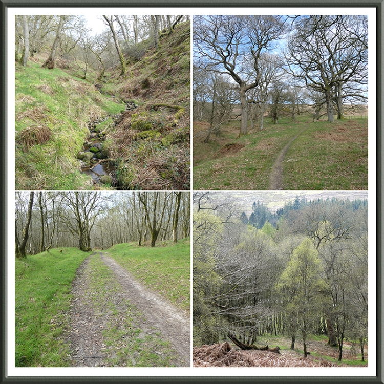 four views of walk throuhg oak woods