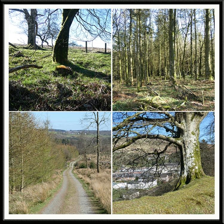 four walk views