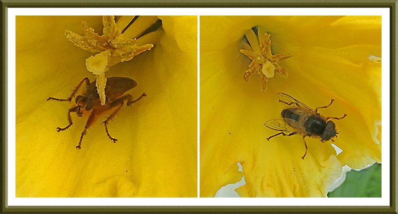 insects in daffs