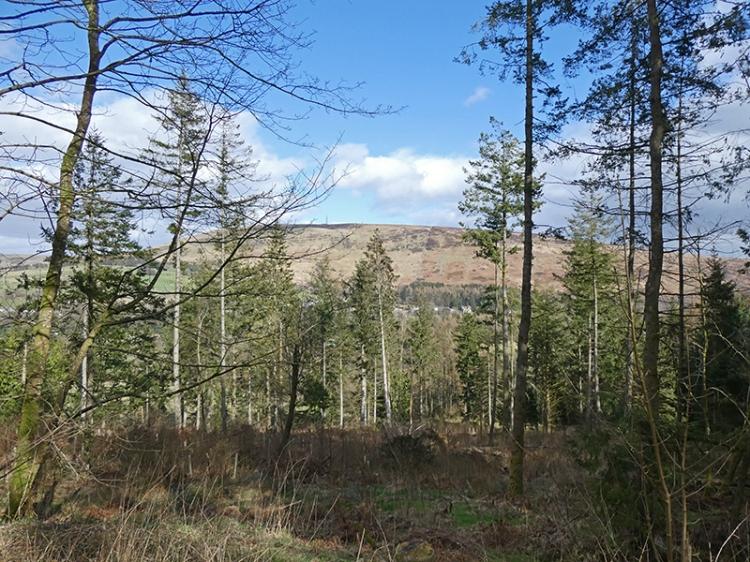 kernigal wood view