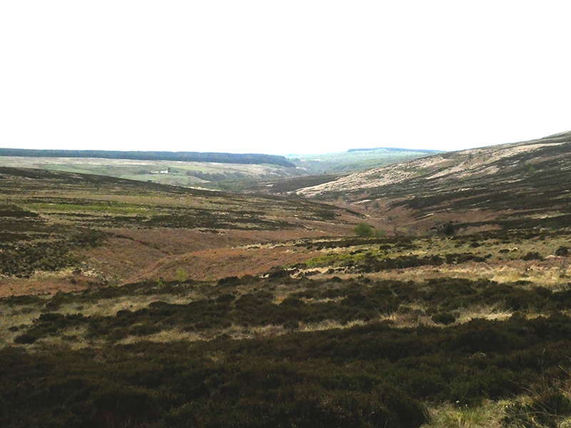 little tarras valley from top