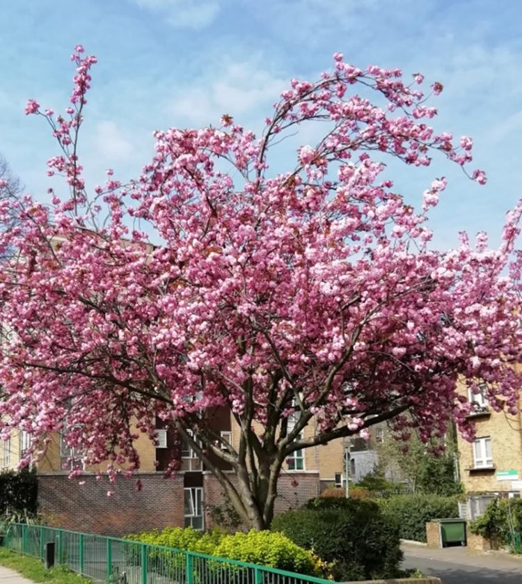 mary's blossom