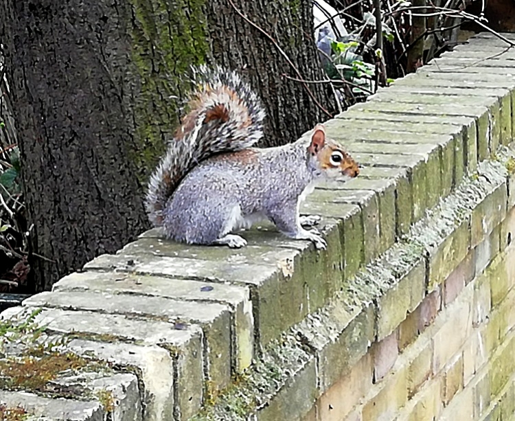 mary's squirrel