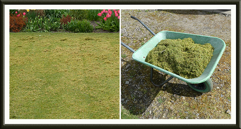 middle lawn after scarifying