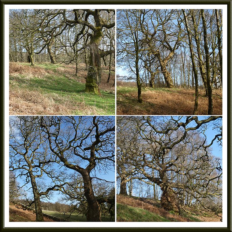 oaks below round house