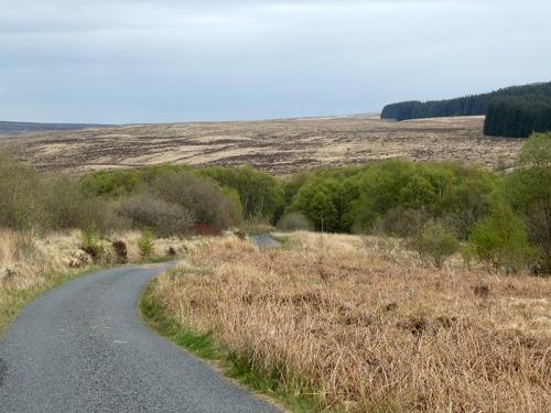 road from bird hide