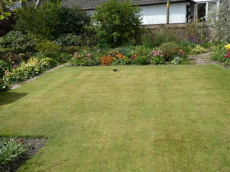scarified lawn april