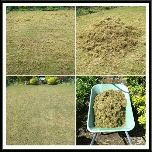 scarifying the front lawn