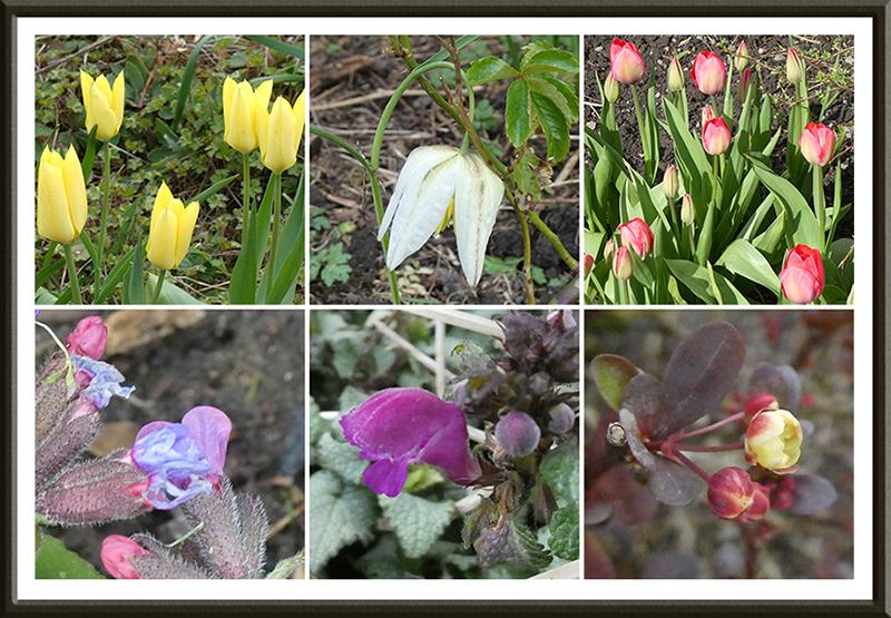 six garden flowers