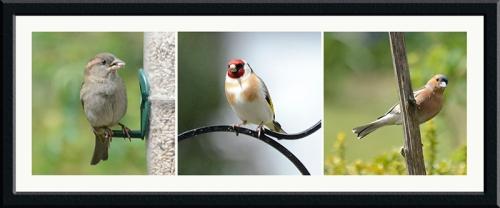 sparrow goldfinch chaffinch
