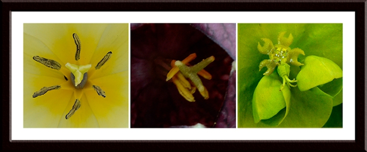 three flower close ups