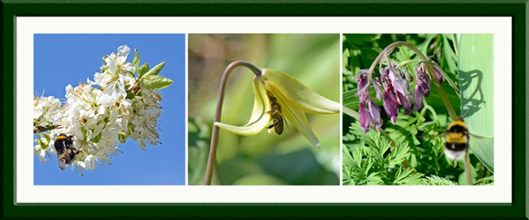 three pollinators