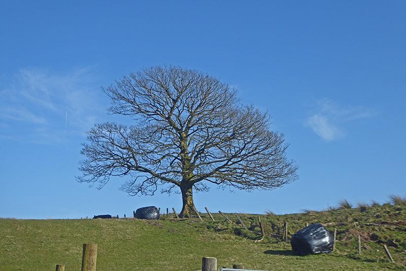 tree at bloch
