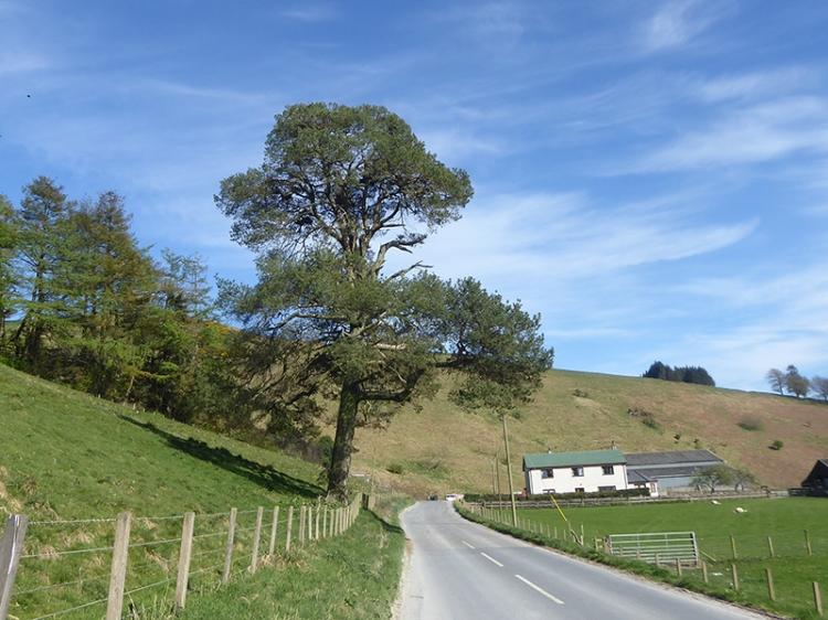 tree near grange quarry