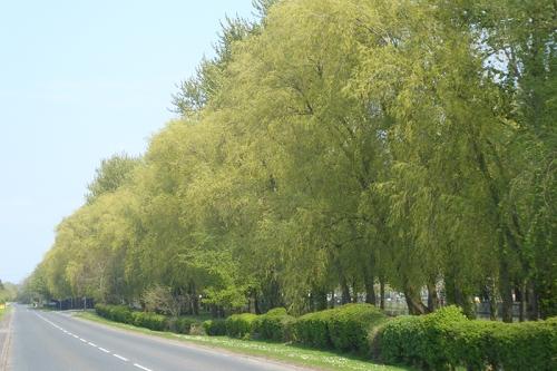 trees at CAD