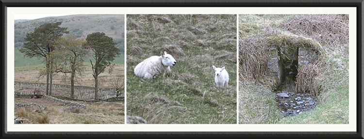 trees lambs and mini birdge