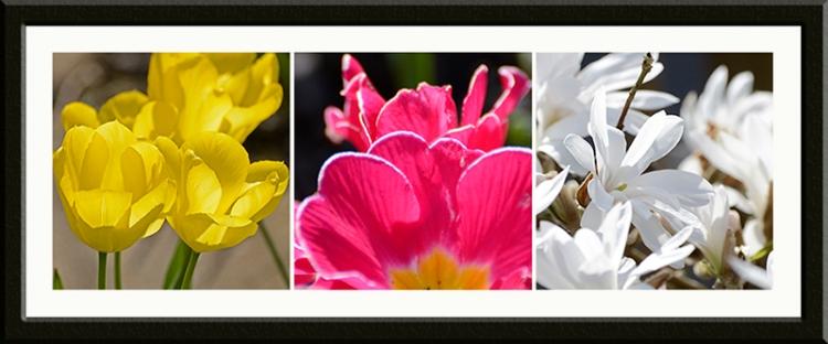 tulip primrose magnolia